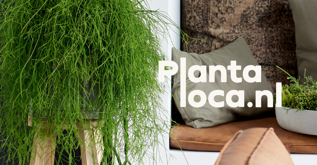 Planten webshop plantaloca