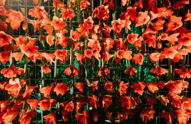 Charity dinner in the Garden of Amsterdam met plafond van Amaryllissen (10)